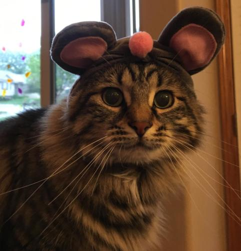 Abby Dunlow #2 - Mouse