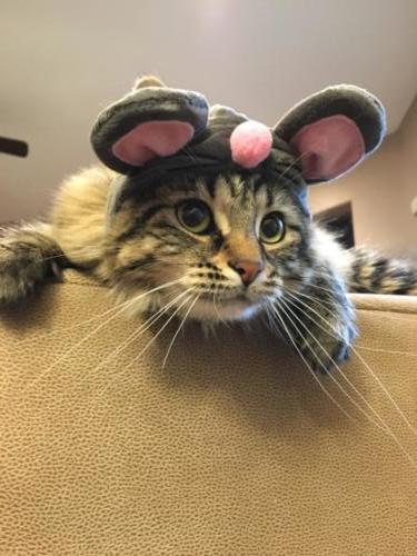Abby Dunlow  - Mouse