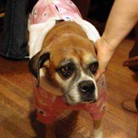 Amber Paul - 10 December 2000 - 8 December 2014Mentor to Moose & Rocky