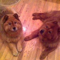 Bella (L) and Orso (R)Orso March - 1999 - 12 July 2013Bella March - 2002 - 3 September 2014
