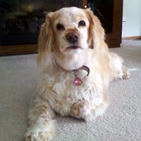 Cassie Mae Wilson - 24 April 2000 - 1 September 2013