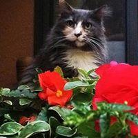 Pretty Kitty McGlothlin - 8 November 2008 - 13 July 2015