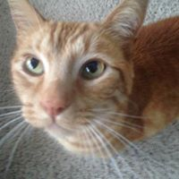 Rudy Polley - 1 August 2006 - 13 January 2016