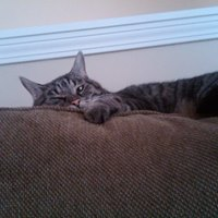 Doug Thelen - 4 July 1999 - 17 October 2013Devoted companion of Whiskey from 2010 - 2012