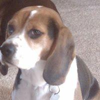"Sir Jack's Pretty Boy (""Jax"") Wyrick - 27 September 2007 - 3 April 2015"