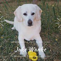 Jake Wanke - 10 November 2006 - January 2018