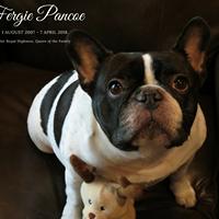 Fergie Pancoe - 1 August 2007 - 7 April 2018