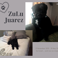 ZuLu Juarez - 17 November 2015 - 19 May 2018