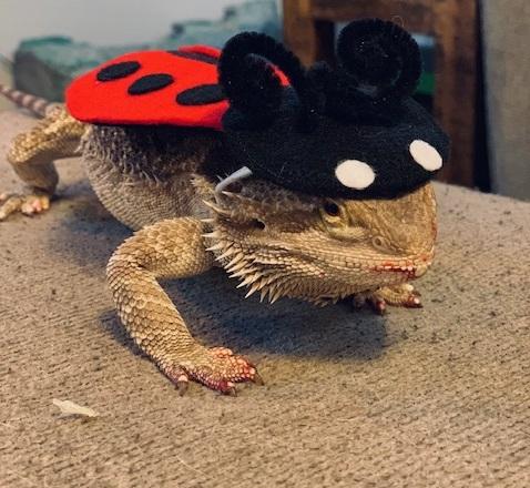 Khaleesi Driscoll - Ladybug