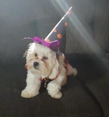 Luna Aguayo - Polka Dot Witch