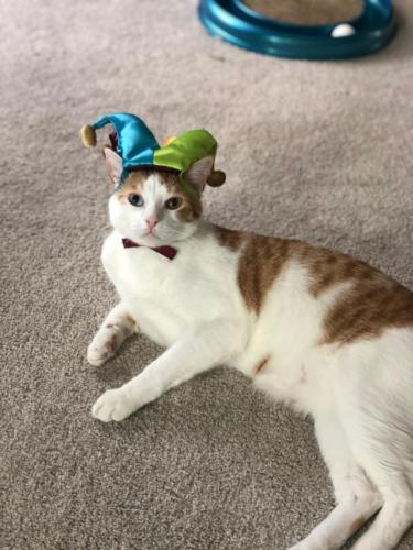 Winston Passler - Jester