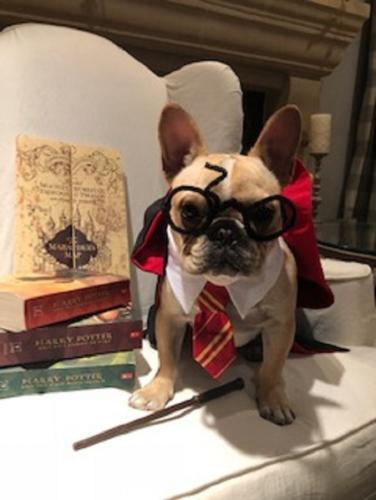 Wynston Potter Griffendor Hays
