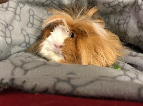 Serenity Bergman - Guinea Pig